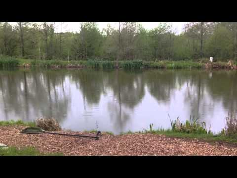 Stalking For Carp At Beaver Fisheries
