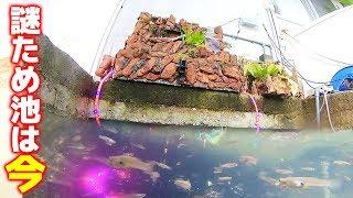 30年放置された謎ため池をさらに大規模改良!【謎ため池S2 #1】