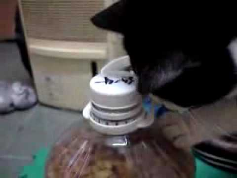 Smart Cat Steals Peanut From Container… Wow
