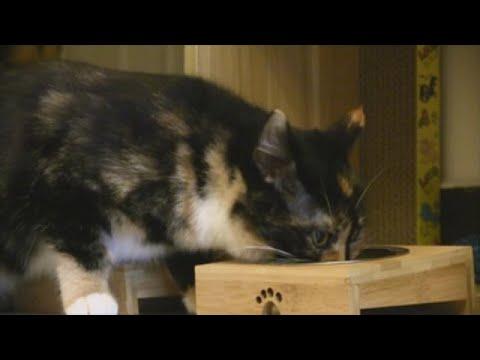 Las Mascotas, Víctimas De Un Coronavirus Del Que No Se Pueden Contagiar