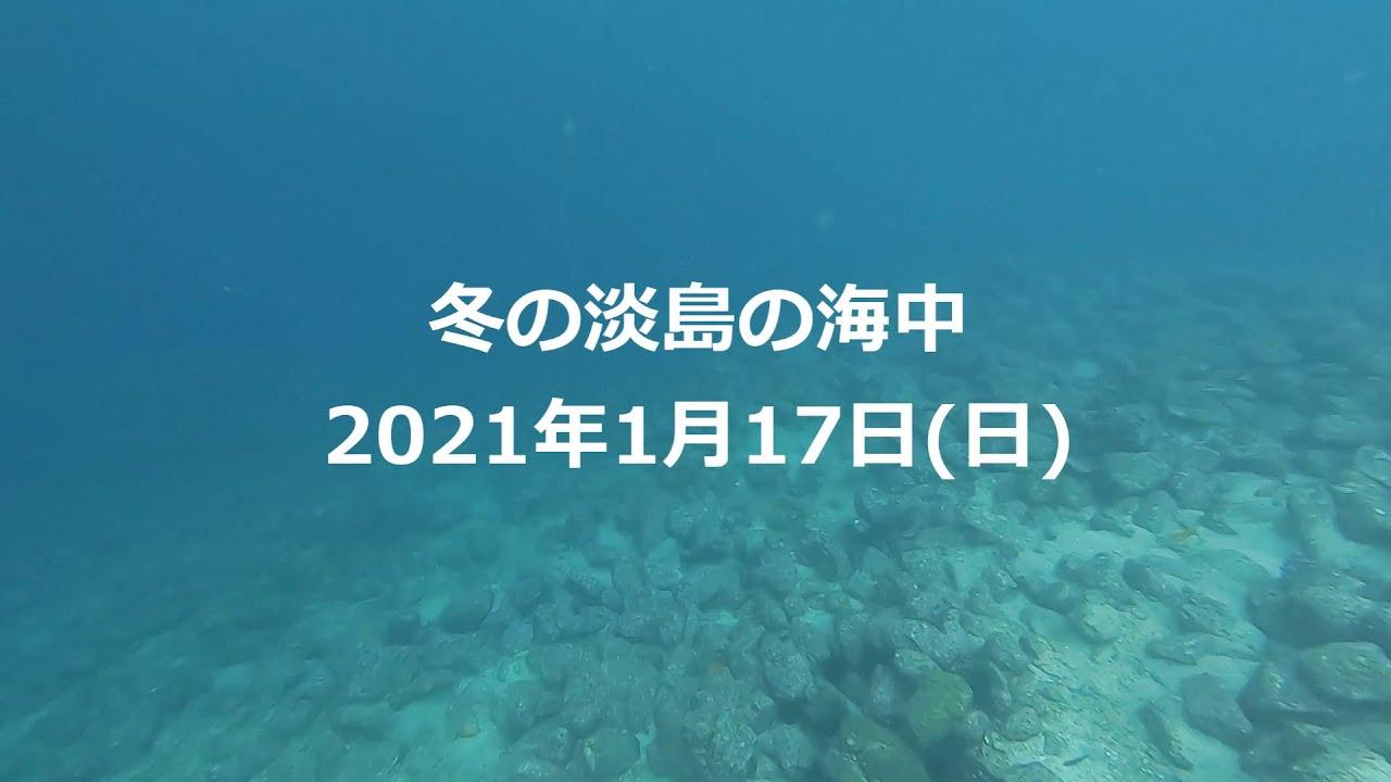 【1月17日】冬の淡島ダイブ