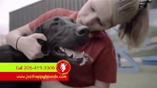 Just Happy Hounds Dog Daycare Birmingham