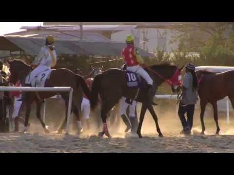 Santa Rosa Park Trinidad Horse Racing by OneManOutfit