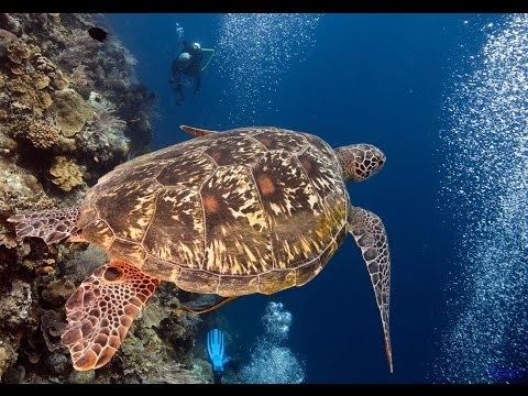 Diving Bunaken in North Sulawesi from Thalassa Dive Resort