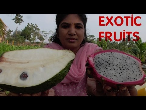 RARE AND EXOTIC FRUITS ONE MUST NEVER MISS TO EAT | HEALTHY FRUITS