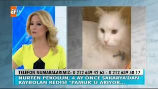 4 ay önce Sakaryada kaybolan kedi \Pamuk\ aranıyor - Müge Anlı İle Tatlı Sert 1785. Bölüm - atv