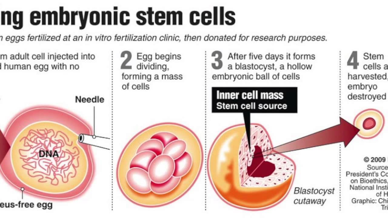 biotechnology and stem cell research