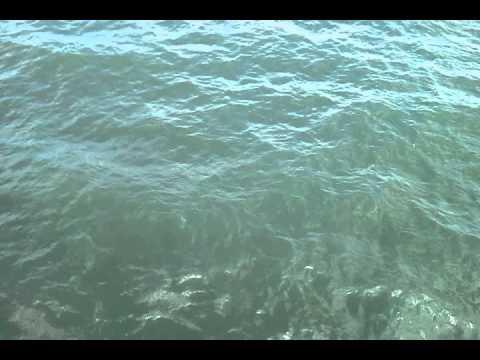 Myrtle Beach Pier Sand Sharks