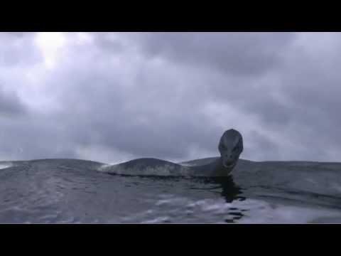 Donald Quinn: Loch Ness Monster