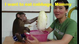 Monkey Doo Loves Mom   Playful Monkey