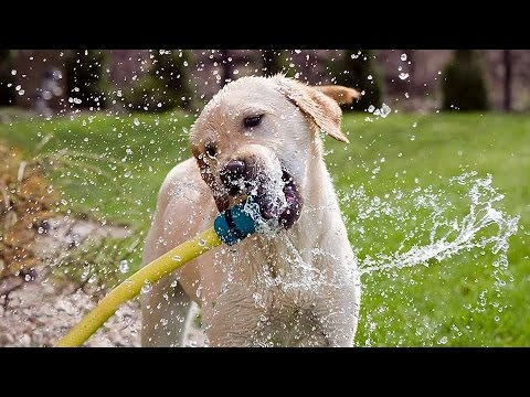 """""""Funny Dogs Playing With Water Compilation""""    CFS"""
