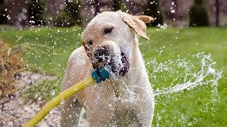 """""""Funny Dogs Playing With Water Compilation"""" 
