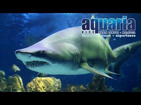 aquaria-klcc-kuala-lumpur-tickets,-underwater-tunnel,-shark-feeding,-kuala-lumpur-tourist-attraction