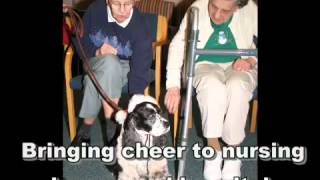 Holiday Therapy Dogs (2011)