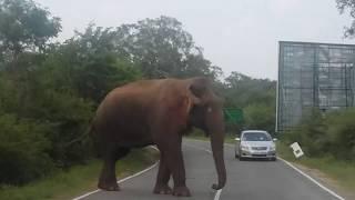 Gambar cover Elephants Attack Sri Lanka (Buttala - Kataragama Road)