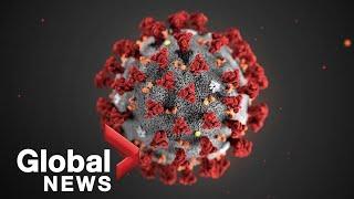 COVID-19: New coronavirus given name by World Health Organization