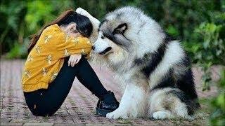 10 Video Cho Thấy Chó Là Bạn Không Phải Là Đồ Ăn