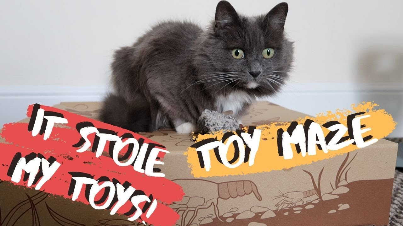 Super Simple Toy Maze All Cats Will LOVE
