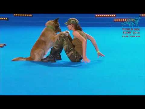 FCI Dog dance World Championship 2016 – Freestyle final   Lusy Imbergerova and Deril (Italy)