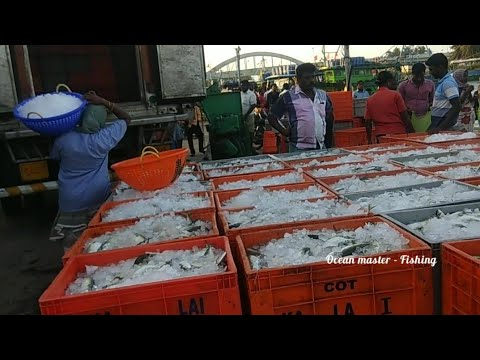 Live Fish Export In INDIA