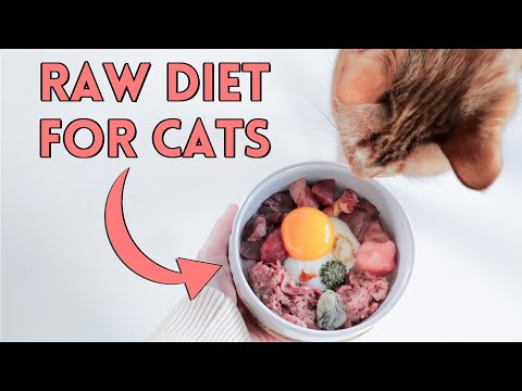 How To Raw Feed Your Cat - Nutrition Details You NEED To Know