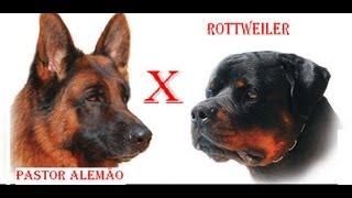 Rottweiler Vs Pastor Alemão