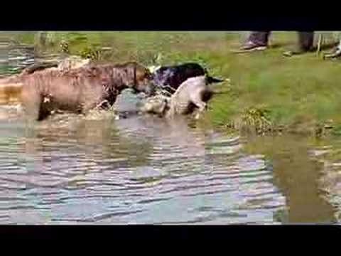 Yoshi deciding if its good to go swim
