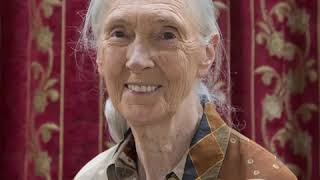 Jane Goodall | Wikipedia audio article
