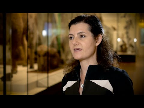 AARNet Interview: Dr Rebecca Johnson (Australian Museum Research Institute)