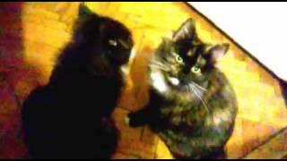 Нежность котят
