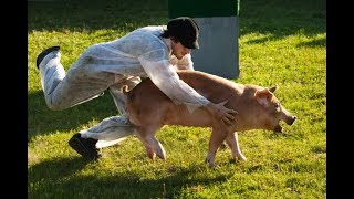 Crazy People Riding Pigs - Funniest Animal Videos Compilation 2019 [BEST OF]