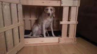 Homemade Wooden Dog Crate