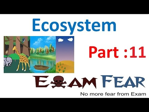 Biology Ecosystem part 11 (Energy Flow) class 12 XII