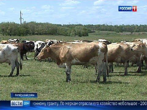 Донским животноводам увеличивают субсидии в 4 раза