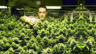 Cannabis Legalisierung in Colorado | Der Marihuana Goldrausch