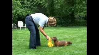 Training a Dog to TRADE