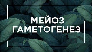 Мейоз, гаметогенез | ЕГЭ Биология | Даниил Дарвин