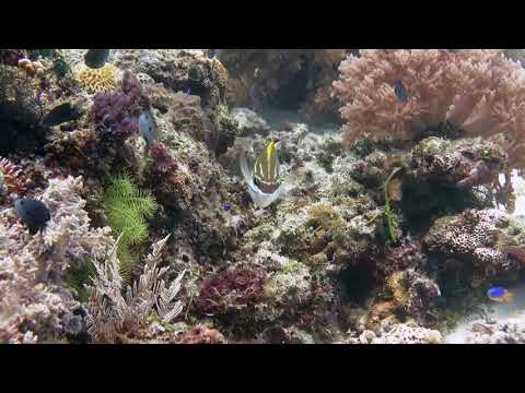 Curious Tropical Reef Fish Poses For The Camera