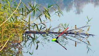 Шикарный клев КАРАСЯ на поплавок в середине осени Ловля карася на удочку Рыбалка на карася