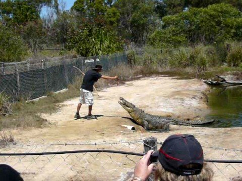 Koorana Crocodile Farm, Australia - Farmer Feeding Crocodile