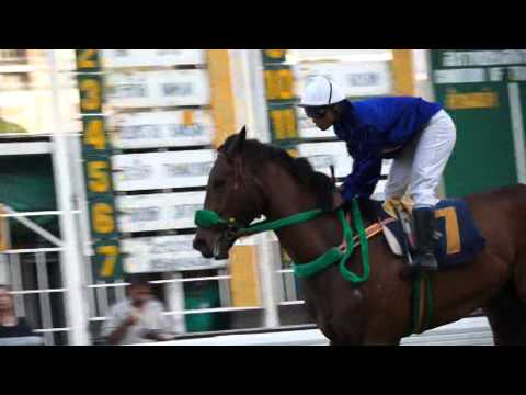 ศึกยอดม้าแข่งแห่งประเทศไทย 57