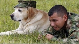 Training Military Dogs for War
