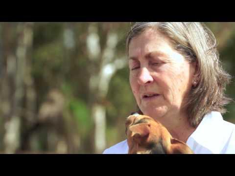 the-equi-life-coaching,-counseling-&-healing-herd-of-horses