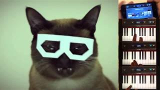 DUBSTEP CAT - Meow~ Remixing (stereo skifcha cat)