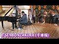 I played SENBONZAKURA on piano in public