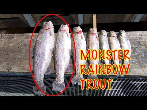 Nelson Family Vacation | Trout Fishing Beavers Bend Lower Mountain Fork River