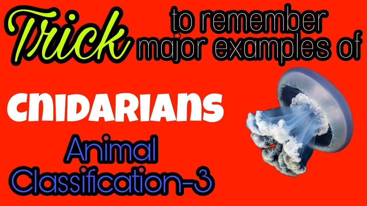 Trick To Remember Major Examples Of Cnidarians By Biotrickology