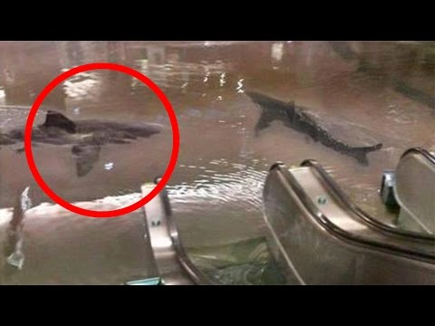 Shark Tank Breaks In Mall (real or fake?)