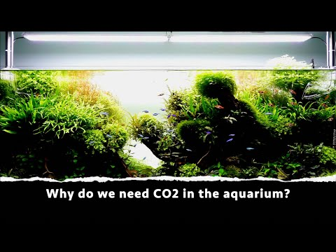 Why do we need CO2 in the aquarium?