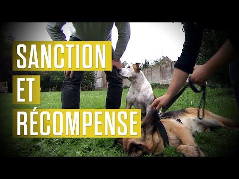 Sanction, récompense, comment bien éduquer son chien